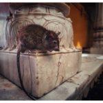 Храм Крыс в Индии — Карни Мата