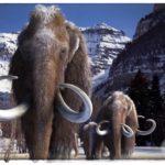 Люди действительно охотились на мамонтов