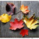 Почему деревья сбрасывают листья