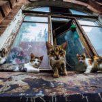 Зачем наложницы султана заводили кошек