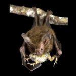 Как работает эхолокация летучих мышей
