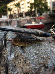Морская рыбалка в Турции 2