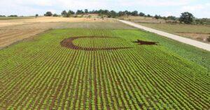 Развитие сельскохозяйственного сектора Турции 1