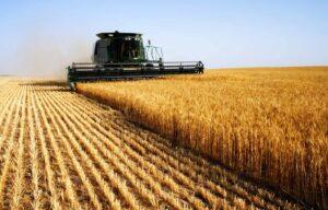 Развитие сельскохозяйственного сектора Турции 3