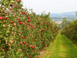 Развитие сельскохозяйственного сектора Турции 2