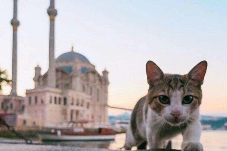 Где оставить домашнего питомца перед отъездом в Турцию 1